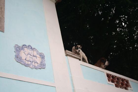 Doggies_near_the_castle