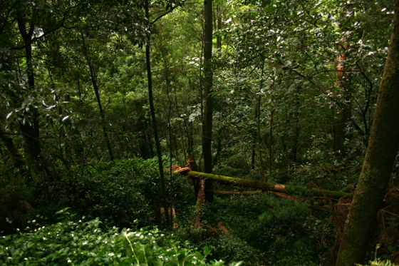 Moorish_castle_forest