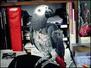 _39784261_parrot3_roselli_203